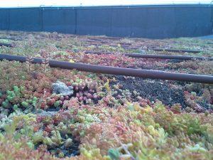 Kapljično namakanje zelene strehe