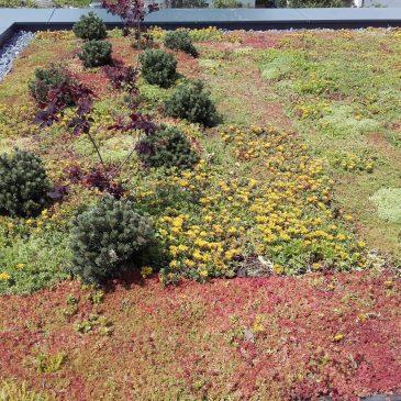 Vse kar je potrebno vedeti o izdelavi zelene strehe