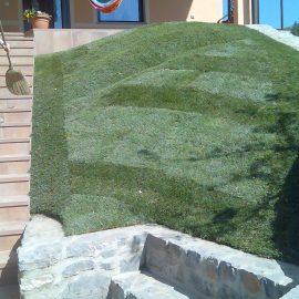 Oskrba travne ruše po polaganju