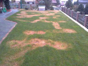 Nepravilno škropljenje trave